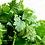 Thumbnail: Coriandre, graines entières, vrac