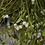Thumbnail: Gui, herbe, vrac