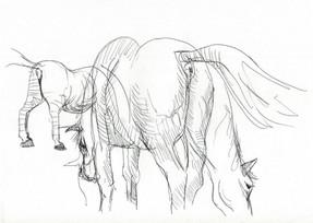 Cavalli.jpg