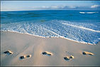sandfootprints2.jpg