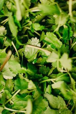 verduras_frescas_orgánicas