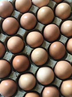 huevos_libre_pastura_polanco