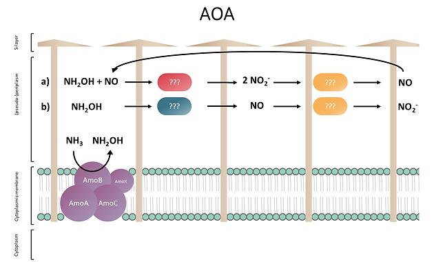 AOA_enzymes.tif