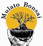 Mulato Bonsai Logo 2.png