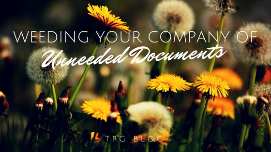 Weeding Your Company of Unneeded Documents