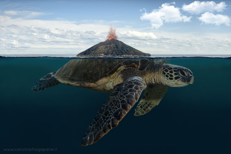 carolina-fragapane-stromboli-turtle.jpg