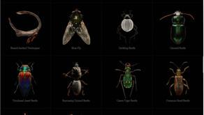 给昆虫拍艺术照的男人