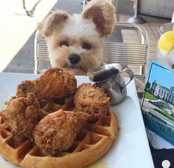 Wings N' Waffle & a Cute Little Dog!
