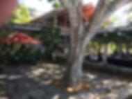 holuakoa-cafe-gardens.jpg
