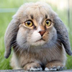 CPP bunny2501332248947.jpg