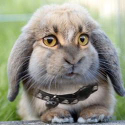 CPP 4 bunny2501332248947.jpg