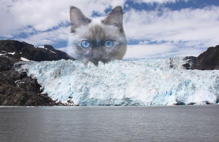 CPPS Q-Tip in Alaska.jpg