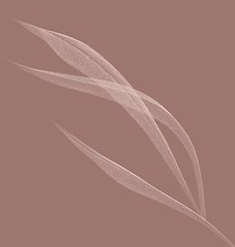 Capture d'écran 2021-06-01 à 14.54.01.pn