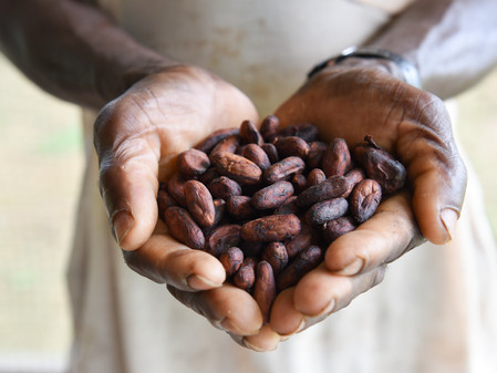 Child Labour on Cocoa Farms: Who Should be Held Responsible?