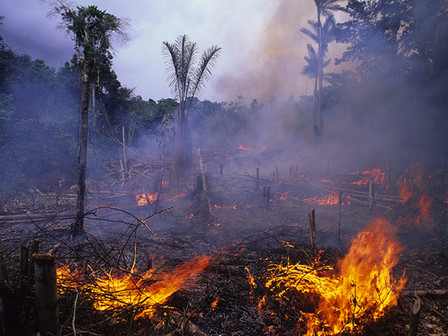 From the frying pan into the fire: Covid-19 and forest fires ravage the Americas