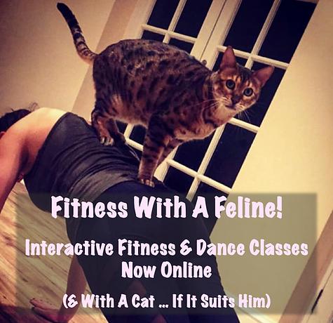 Feline Fitness.png
