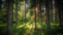 יער.jpg