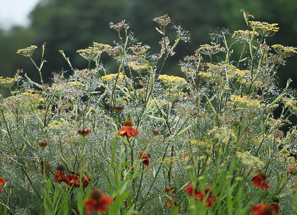 Designing your Herbaceous border