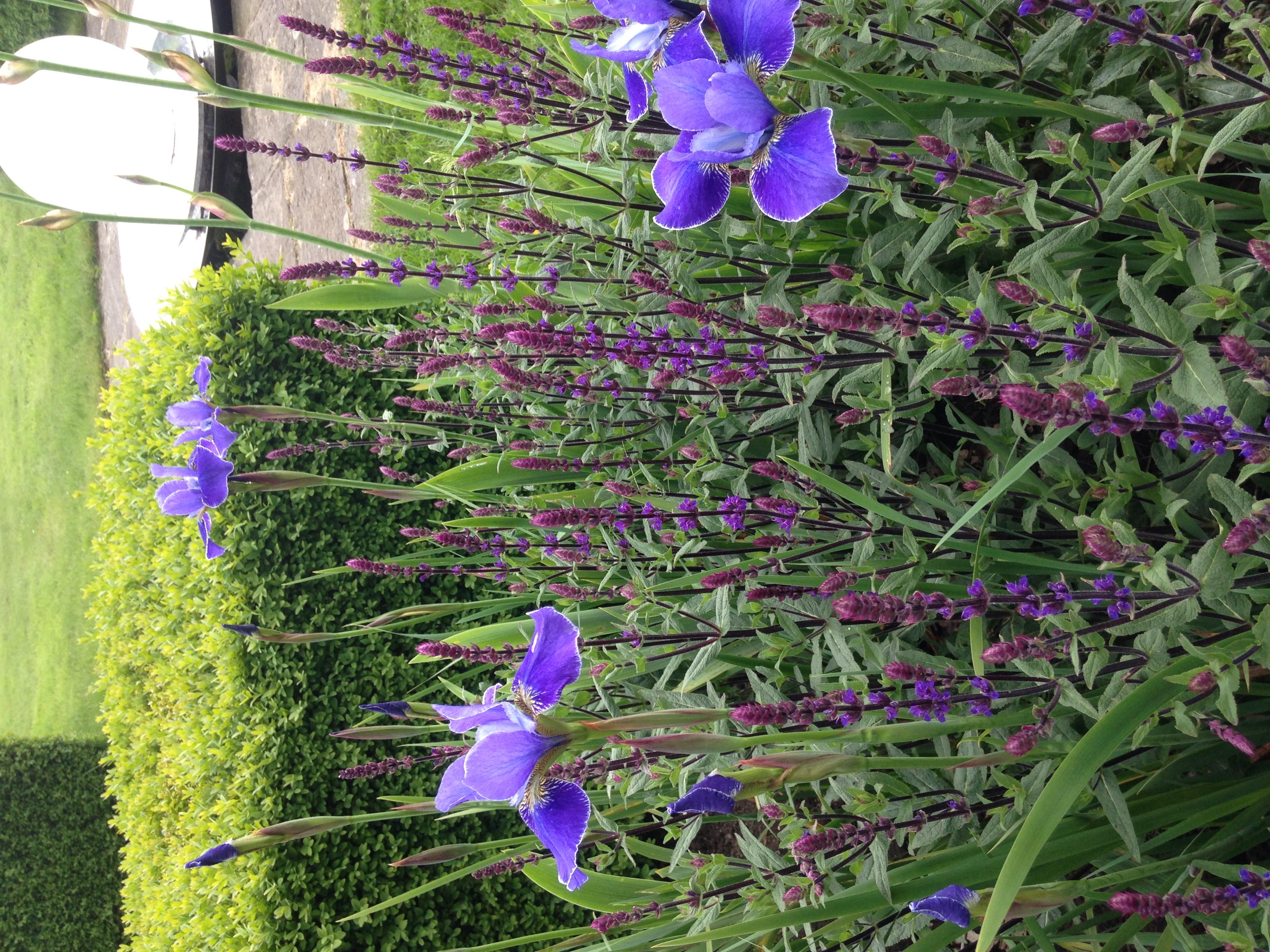 iris borders