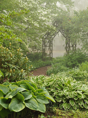 Shade garden with path leading to vine-c