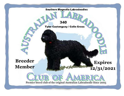 340 Southern Magnolia Labradoodles __ Ty