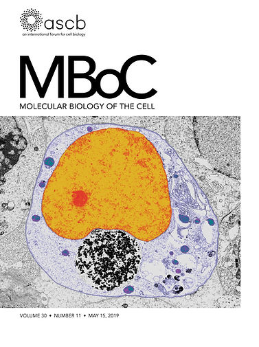 mboc.2019.30.issue-11.cover.jpg