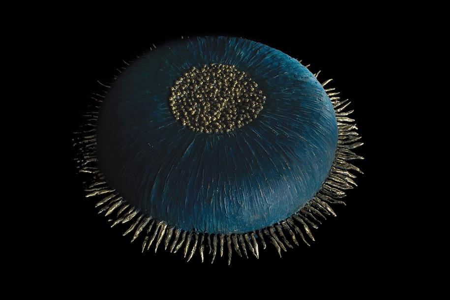 Round Anemone