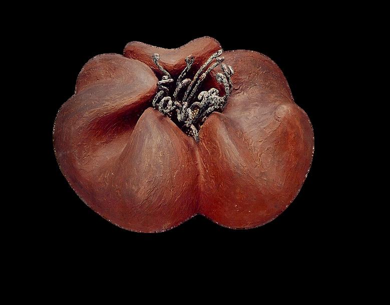 Sea-hibiscus