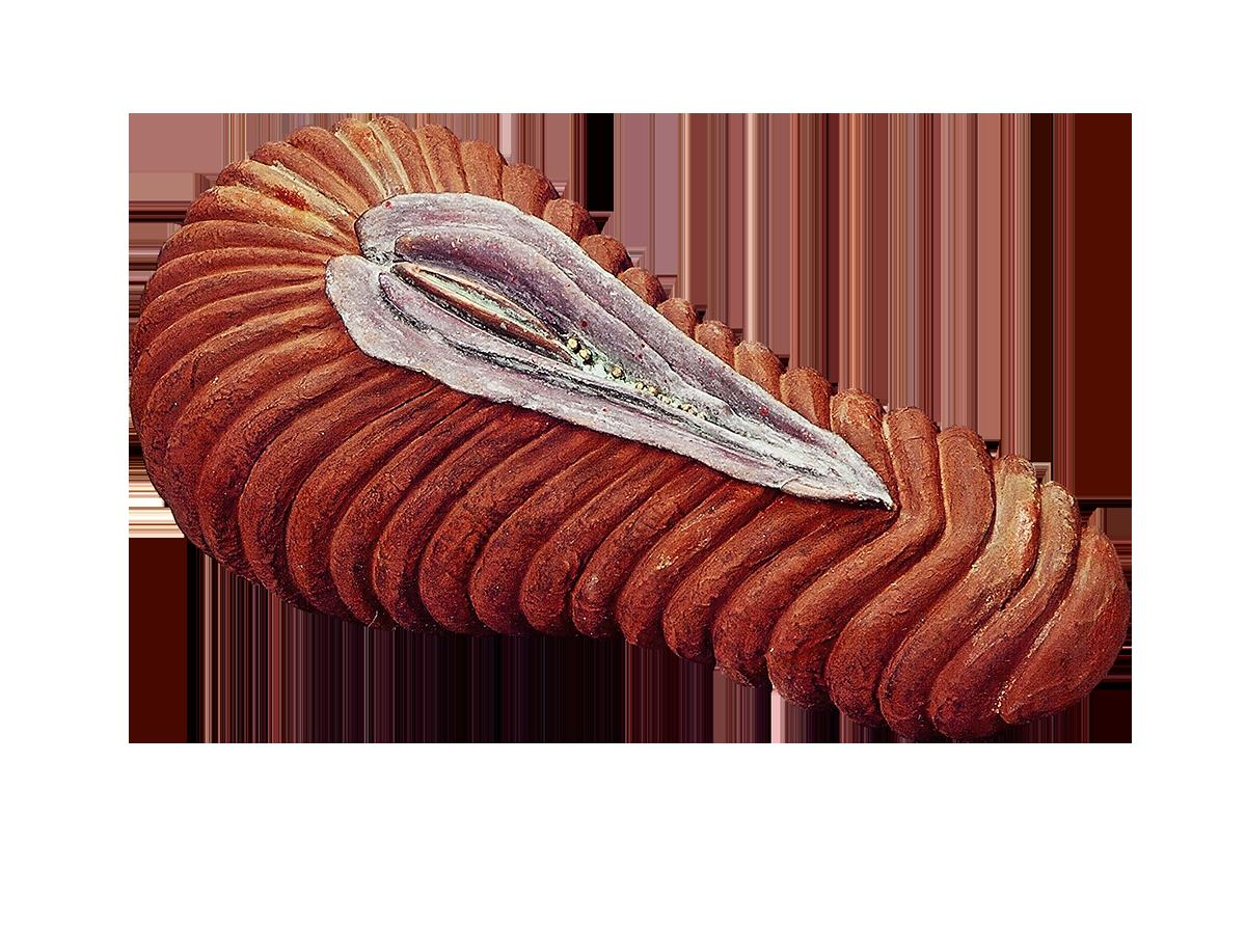 Sea-gourd