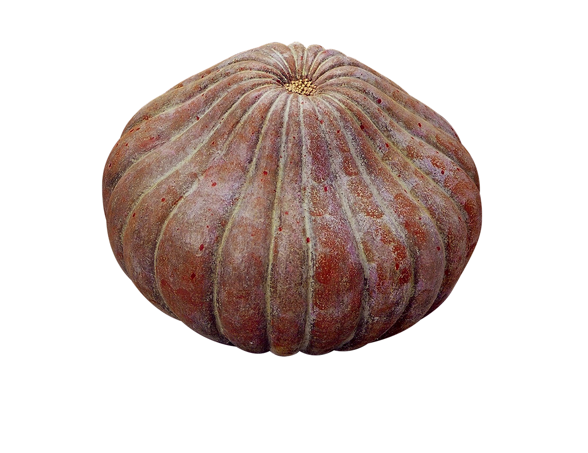 Sea-pumpkin