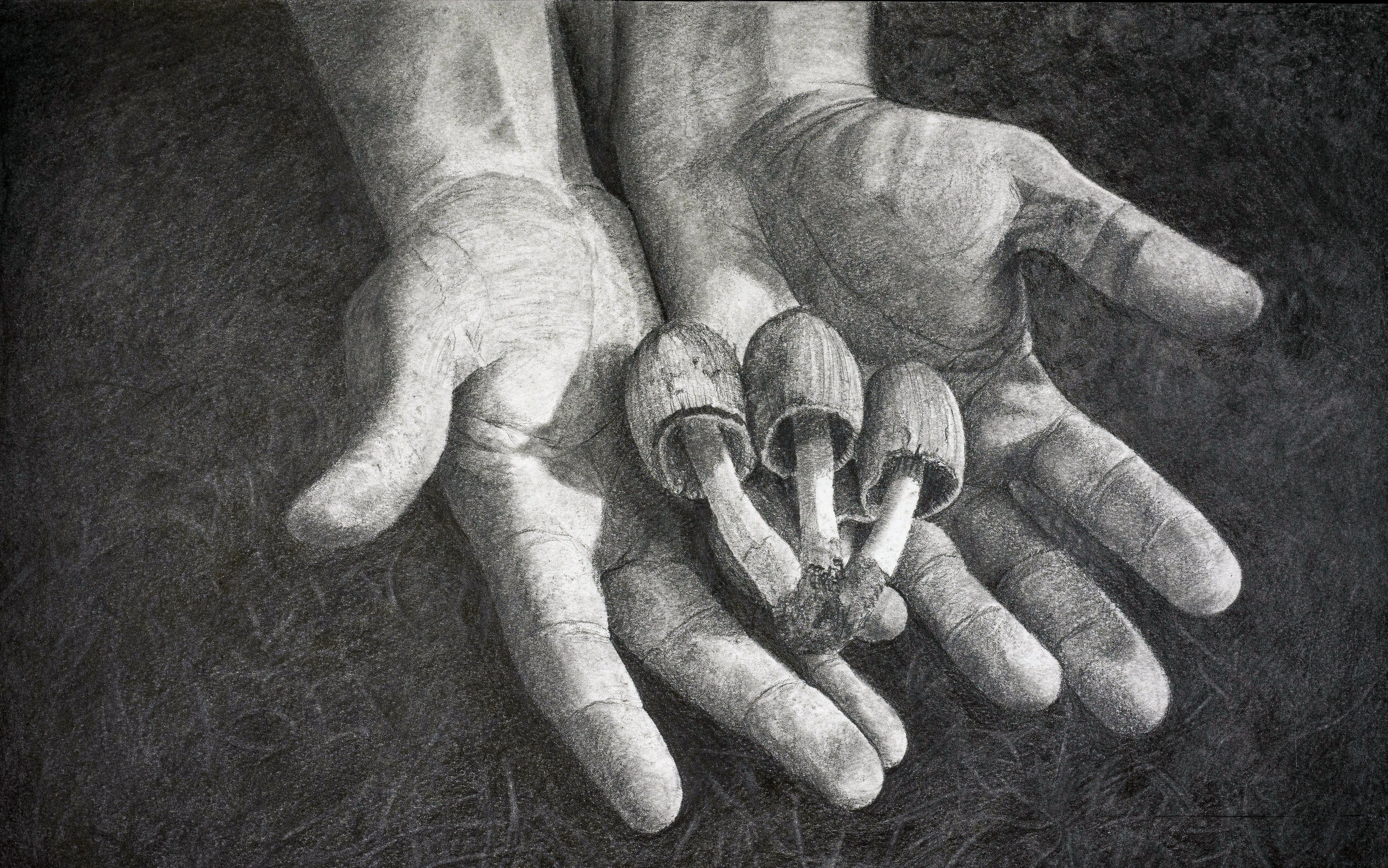 Les champignons (2017)