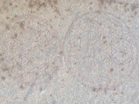 Flower of Life Abydos