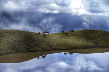 Wild Horses at