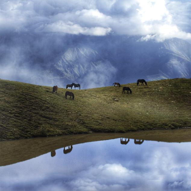 Wild Horses - Peruvian Andes