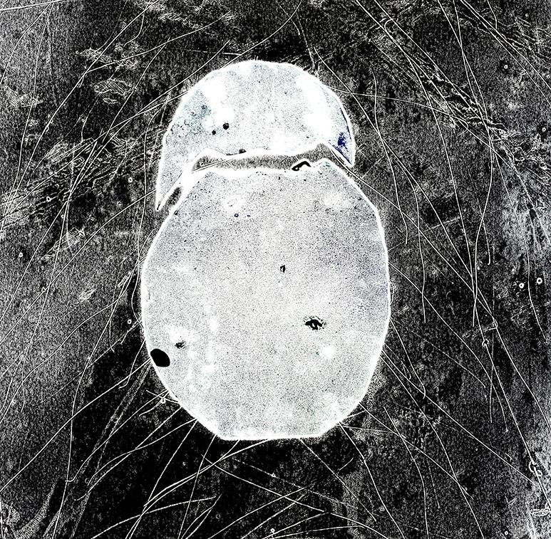 egg poster.jpg 2014-3-18-15:13:20