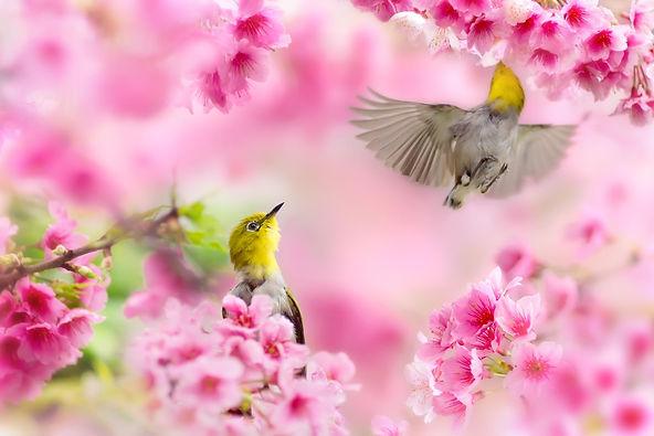 spring-wallpapers-28052-5410124.jpg