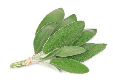 Sage, Fresh (1 oz)