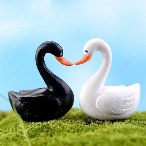 Siyah/Beyaz Kuğu