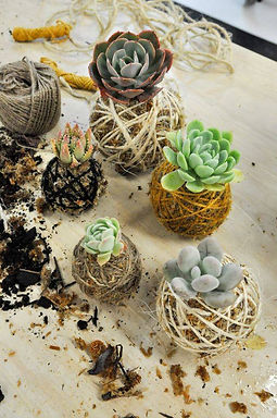 kokedama workshop, teraryum, teraryum malzemeleri, minyaturbahce, kokedama, geometrikfanus, fanus, terrarium, minyatür bahçe, teraryum satin al