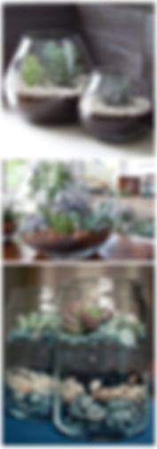teraryum, terrarium, minyatür bahçe, minyaturbahce, bonsai, sukulent, teraryum malzemeleri ankara, teraryum malzemeleri istanbul, teraryum malzemeleri izmir, teraryum istanbul, teraryum malzeme, teraryum için gerekli olanlar, teraryum malzemeleri bursa, teraryum malzemeleri konya