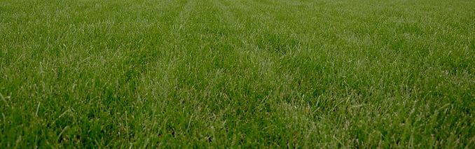 Lawn%2520Strip_edited_edited.jpg