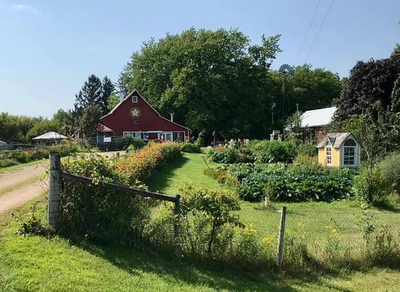 farm summer.jpg
