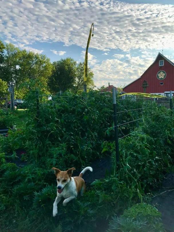 moji garden.jpg