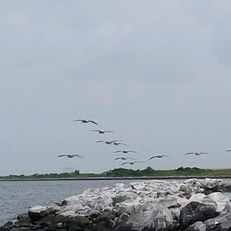 bayou birds