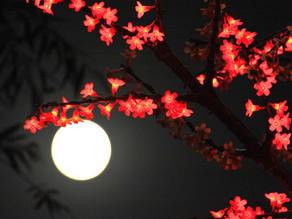 Festival de medio Otoño 中秋佳节