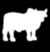 A2 Milk Cow