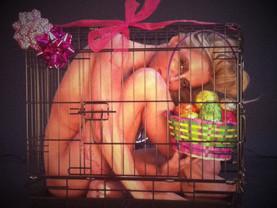 Diet Cage