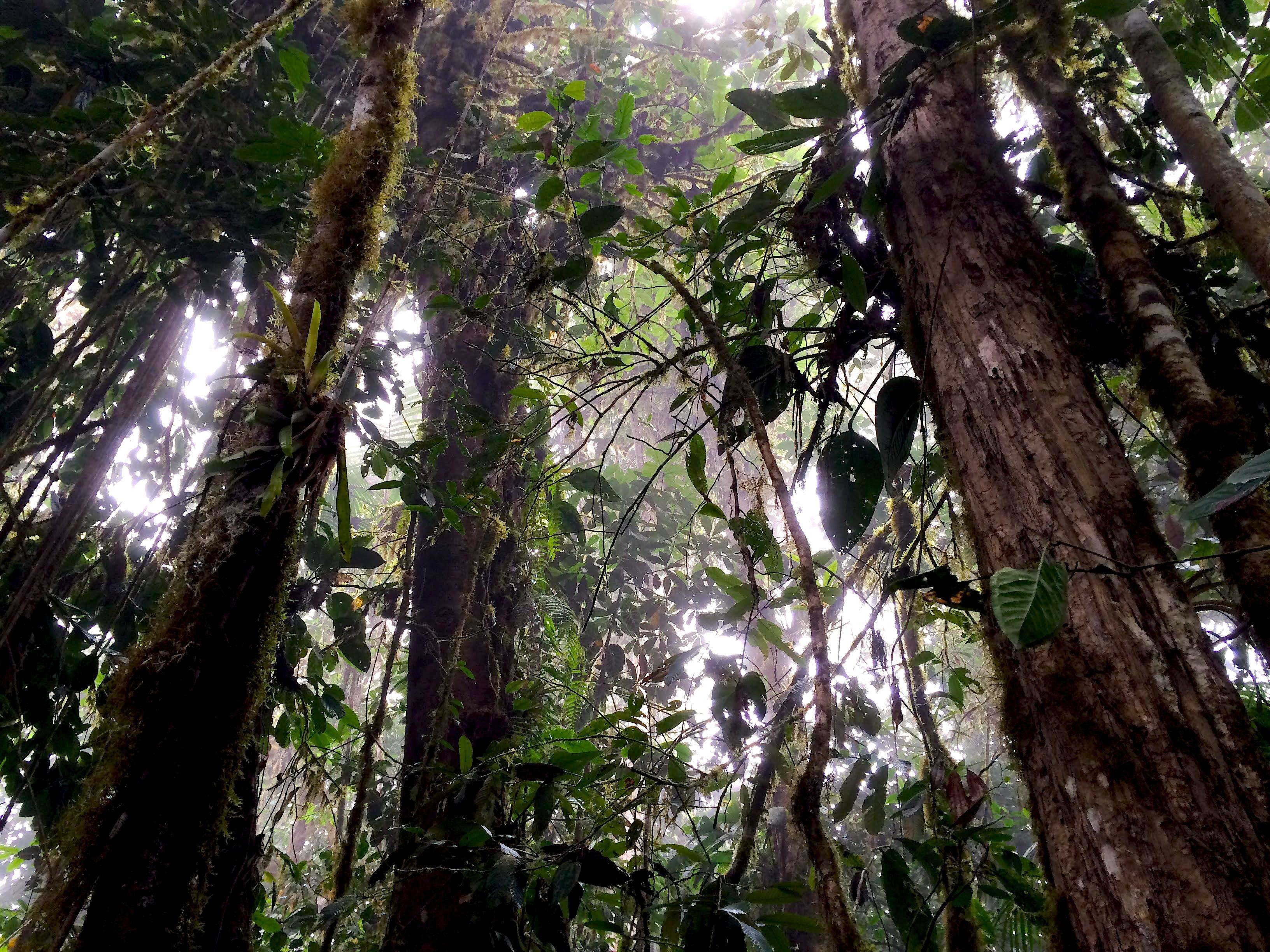 int forêt