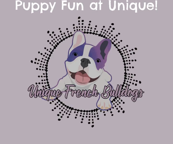 Fun at Unique French Bulldogs