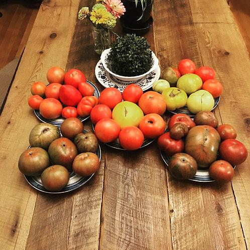 Tomato Seedlings (Beefsteak)